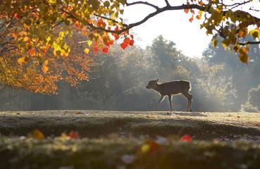 紅葉と子鹿