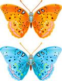 Fototapeta pomarańczowy - zielony - Insekt
