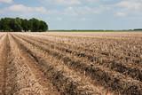 Potato field ready to grub up poster