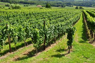 jenins...viticulture