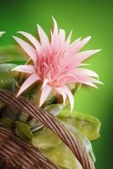 Bromeliad bloom in a basket