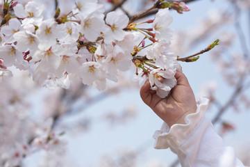 桜の花と赤ちゃんの手