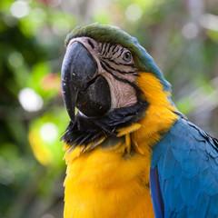 Papagei auf Bali