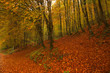 Forest covered with beautiful autumn leaves carpet