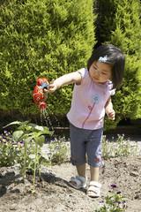 ヒマワリの苗に水をやる子供