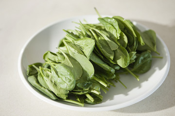 Close-up of spinach leaves on a plate