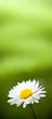 daisy flower, Paquerette sur fond vert - image verticale