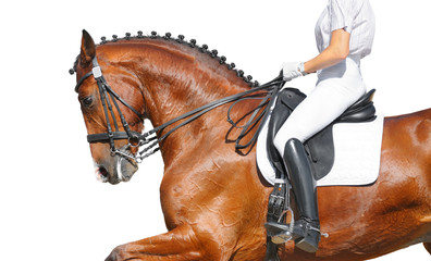 Dressage - bay horse isolated on white