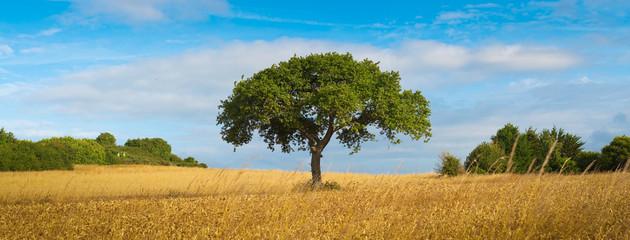 arbre centré sur un champs de blé - écologie