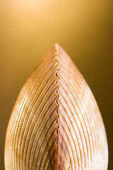 shell on bright golden background