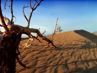 Images of a Desert Landscape