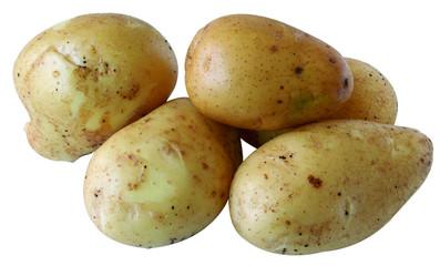 pommes de terre de variété Monalisa sur fond blanc