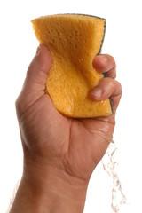 l'éponge mouillée dans la main