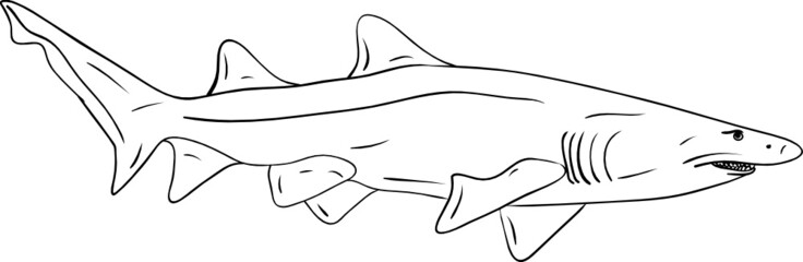 vector - big shark isolated on background