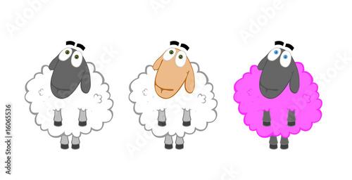 Three sheep - different races but one breed