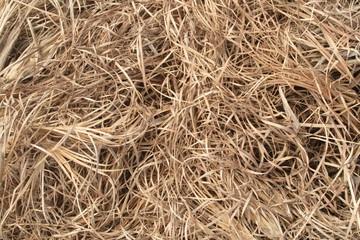 Capim seco (herbe sauvage), Bahia, Brasil