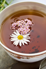 Curative tea with daisywheel and herb