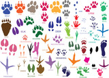 Vector paw prints of animals and birds poster