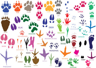 Vector paw prints of animals and birds