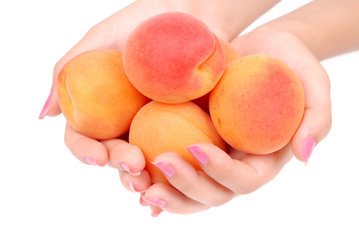 The female hands holds apricots