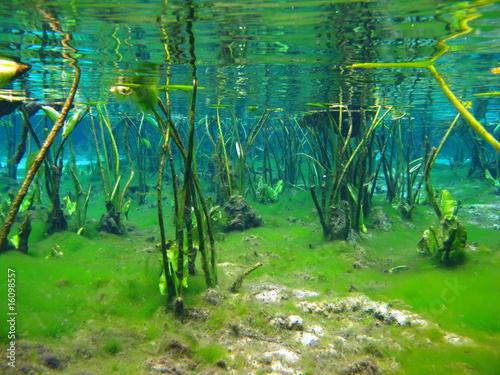 underwater springs