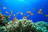Fototapete Tropical fish - Schule - Fische