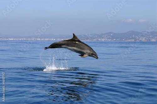 Fototapeten,delphine,delphine,fisch,fisch