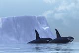 Fototapeta Iceberg - zwierzę - Wodny Ssak