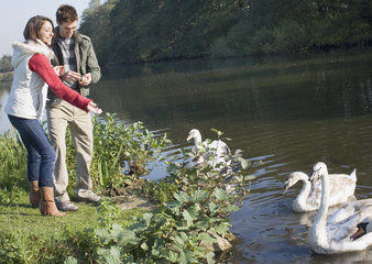Couple outdoors feeding swans in a lake