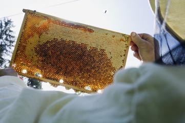 Mann hält Honigwaben