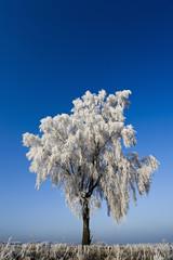 Deutschland, Niedersachsen, Vahrendorf, schneebedeckten Baum