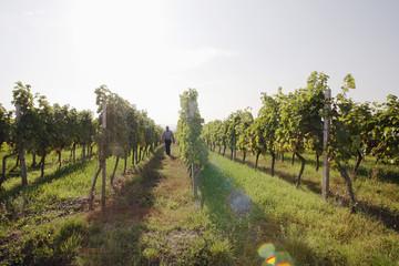 Mann spazieren gehen im Weinberg laufen
