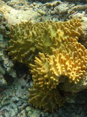 Corallo alle maldive
