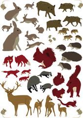 Tiere des Waldes vol.01 Color