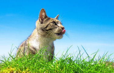 Cute cat outdoor portait