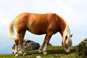 Montagna, Dolomiti, Alpi, Italia, Cavallo