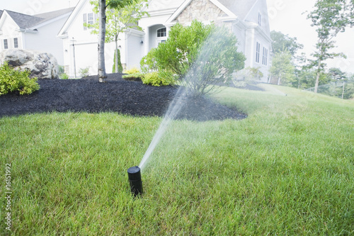 Water being sprayed from a sprinkler in a lawn