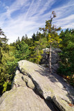 Viewpoint on the rock, pine forest and blue summer sky poster