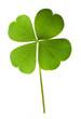Leinwanddruck Bild - Shamrock leaf