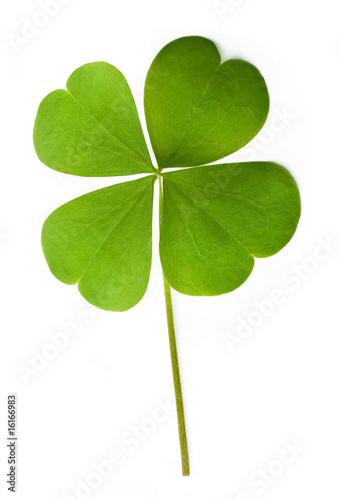 Leinwanddruck Bild Shamrock leaf