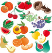 Fruit - vector illustration