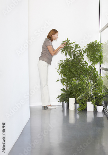 Businesswoman tending plants in office
