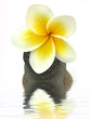 fleur de frangipanier sur pyramide de galets