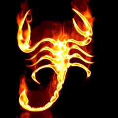 Escorpion surrounded by fire on a white background