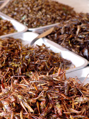 Thailand food stalls - fried insects nb.14