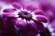 soft pink flower closeup