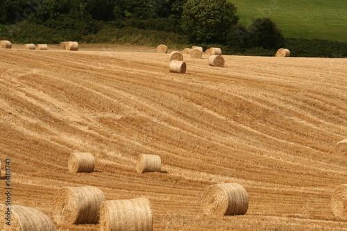 harvesting in ireland - 16188743
