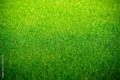 Pelouse verte et tondue sur un golf green photo libre for Pelouse tarif