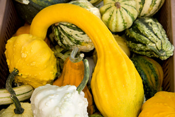 All kinds of gourds