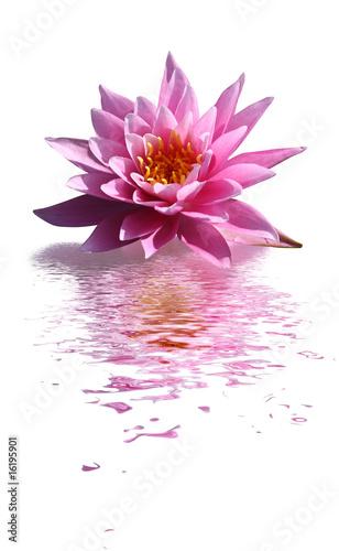 Foto op Aluminium Lotusbloem fleur de lotus